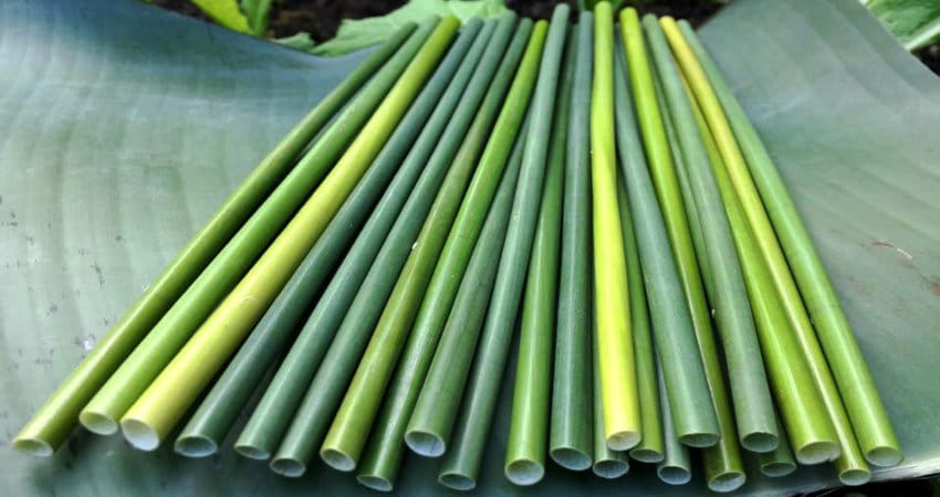 Sourcing eco-friendly straws from lepironia or bamboo in Vietnam