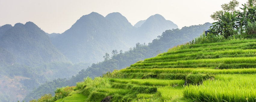 type land in Vietnam : garden, rice field or constructible