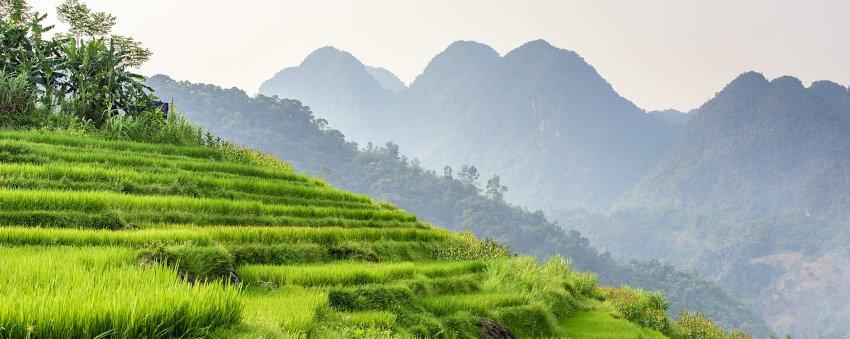 type de terrain au Vietnam : jardin , riziere ou terre constructible